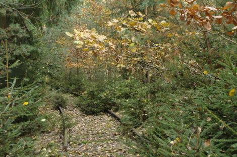 Lokálka Mladotice - Kralovice. Autor: Ivannah, Wikimedia Commons
