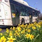 Autobus společnosti Busline na lince pro DPMLJ. Foto: Jan Sůra