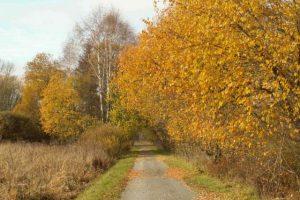 Šumavská lesní silnice. Pramen: Posudek k dokumentaci EIA