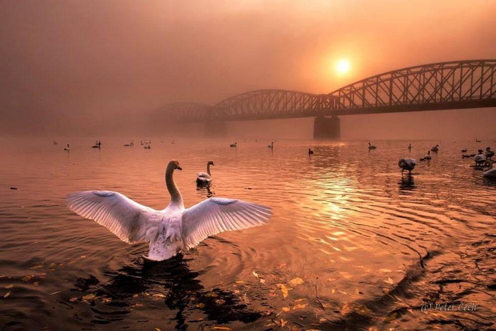 Jeden z vítězných snímků soutěže od Petera Čecha zachycuje železniční most přes Vltavu pod Vyšehradem. Foto: Peter Čech