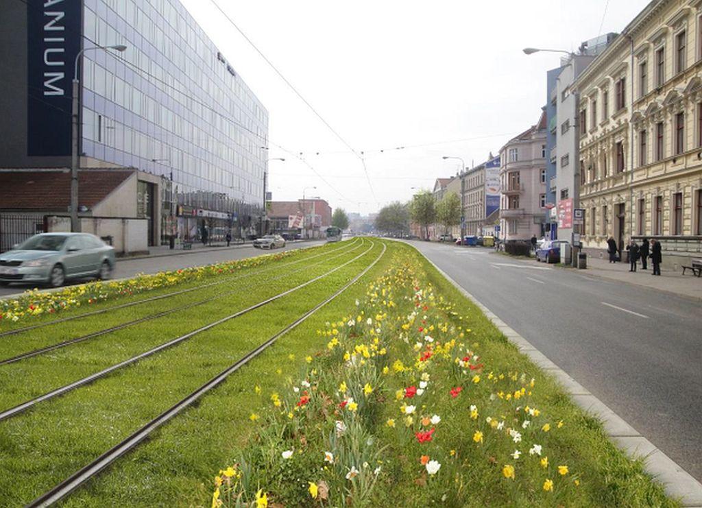 Podél tramvajové trati budou květiny místo keřů. Pramen: DPMB