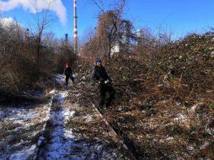 Kvůli přepravě do depa Trnávka museli nadšenci vyčistit koleje vlečky od náletových dřevin. Foto. DPB