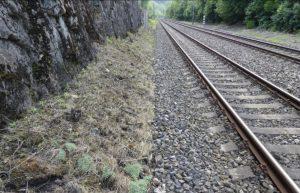 Trsy lomikamene vždyživého u tratě Karlštejn - Beroun. Pramen: Správa železnic/dokumentace EIA