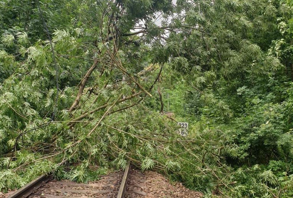 Strom na trati, ilustrační foto. Pramen: Správa železnic