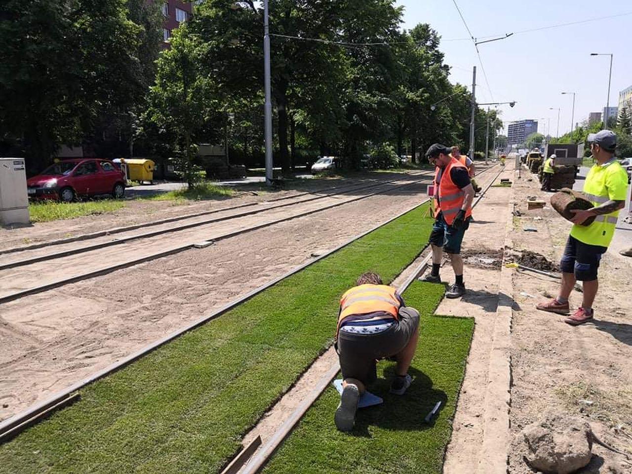 Instalace zeleného pásu na tramvajovou trať ve Výškovické ulici. Foto: DPO