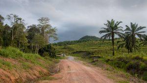 Plantáže palmového oleje v rezervaci Tabin na Borneu. Foto: Mike Prince / Flickr.com