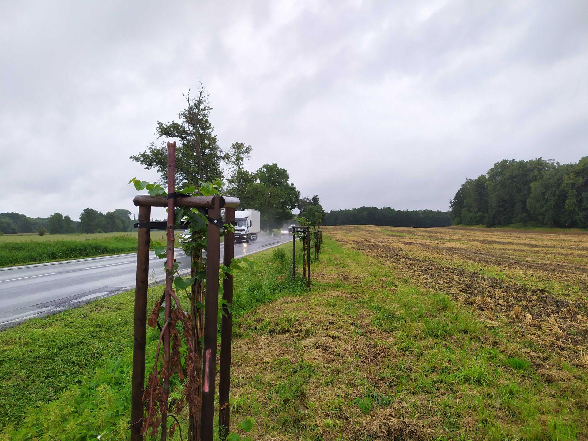 Poničené stromy u silnice I/20 u Blatné. Pramen: ŘSD
