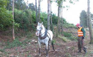 Na přípravných pracích k D4 se podílejí i koně. Pramen: Via Salis